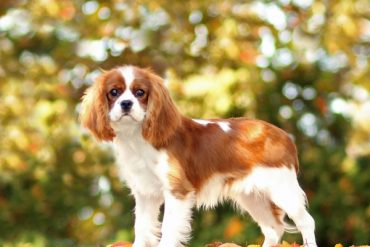 Boarding for Cavaliers only!