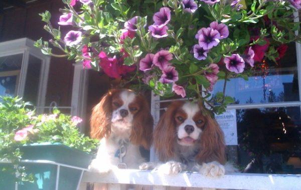 Charlie and Eddie